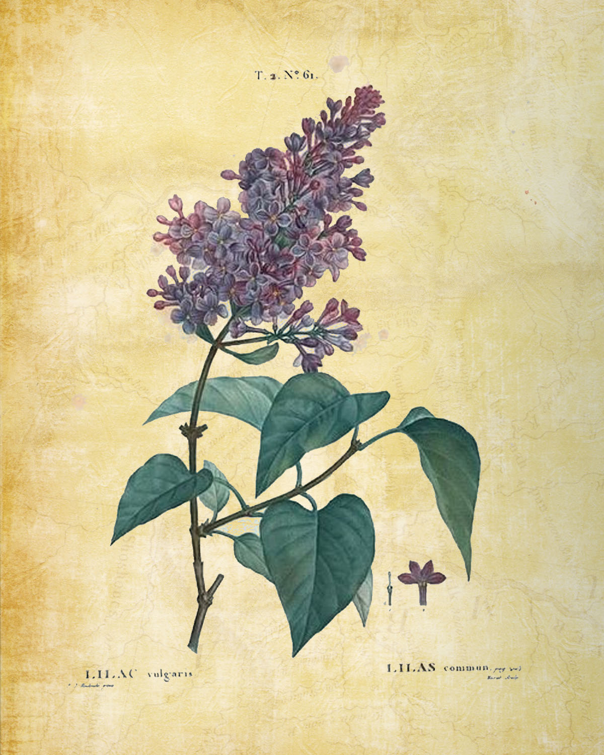 Free printable Lilac and other Flowers