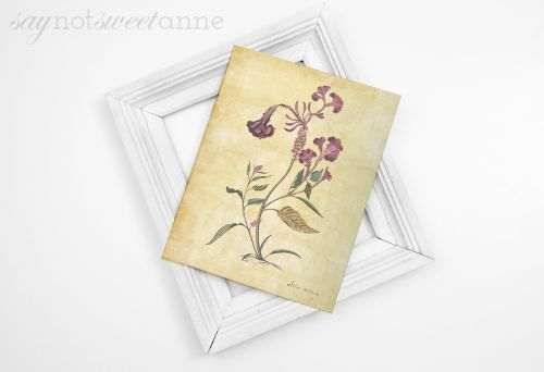 Free Botanical Prints - rustic and unique free printable botanical images! | saynotsweetanne.com