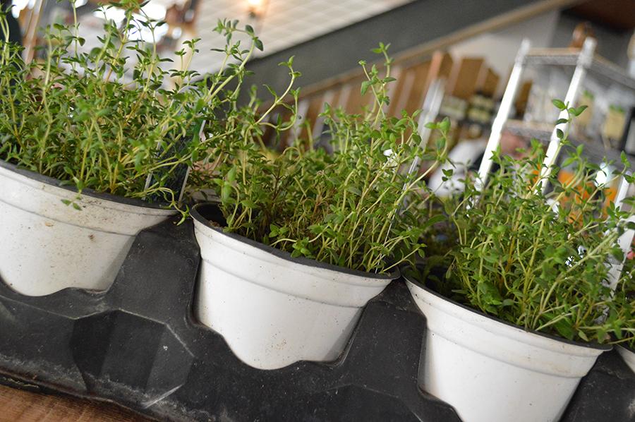 Start a garden as a fun, outdoor activity this summer